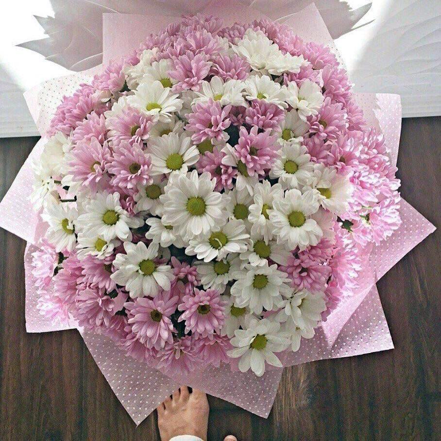 Картинки по запросу хризантемы букет