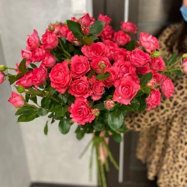 Розы «Белла Линда»