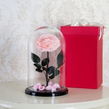 Розовая роза в колбе №2
