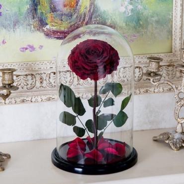 Бардовая роза в колбе №3
